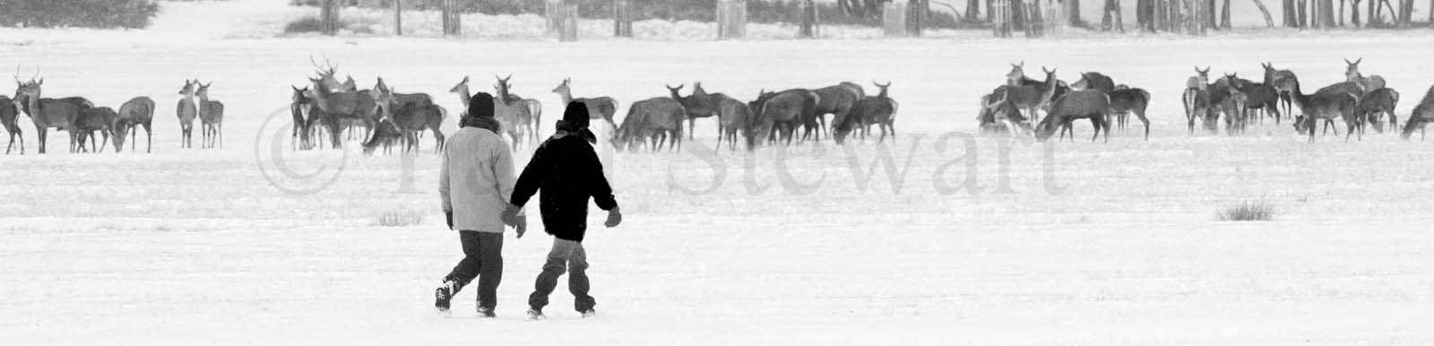 02/12/2010 OPS: Winter fun as Christmas card scenes come to Richmond Park early this year ©Paul Stewart 2010 07917652636