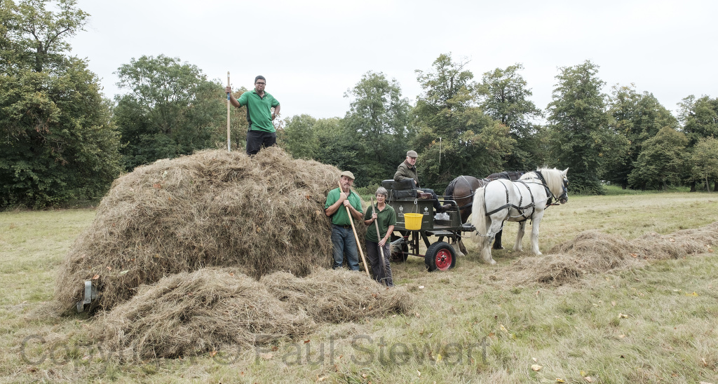 Mowing, raking and stacking the hay meadow at Ham House. ©Picture by Paul Stewart 2016 (L-R)Heath , 10 and Tom, 8 being driven by Tom Nixon and Edward MacDowell, using the reciprocating mower, the side delivery rake and then a low loader The people helping load with pitchforks are Raoul & Linda ©Picture by Paul Stewart 2016